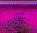 Lámpara para crecimiento de plantas